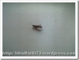 Photo-0369 (2)